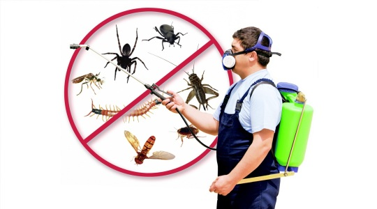 Pest Control  in Vapi