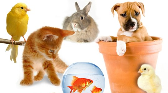 Pet & Pet Care in Vapi